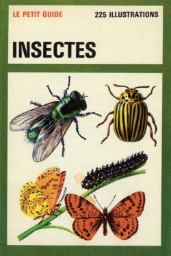 Insects Le Petit Guide