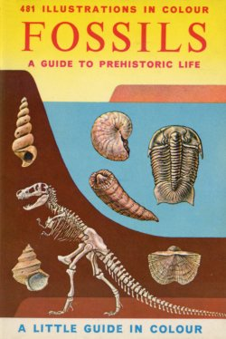 British Fossils Little Guide