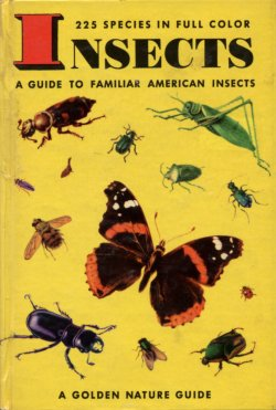 Insects Golden Guide